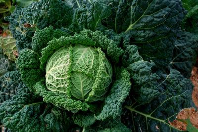 Grünkohl kann auch mit vegetarischem Pinkel zubereitet werden.