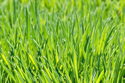 Ab wann man Rasenmähen kann, ist witterungsabhängig.