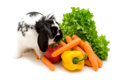 Gesunde Snacks für das Kaninchen