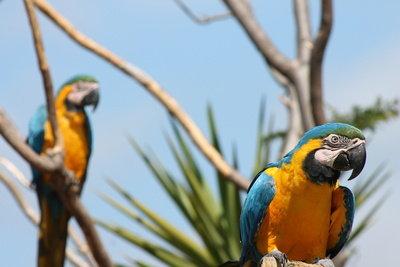 Zoofachverkäufer haben es mit Tieren wie Papageien zu tun.