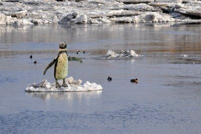 Auch im ewigen Eis gibt es Leben.