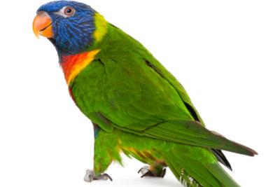 """Das Papagei-Kostüm aus """"How I met your mother"""" ist ganz leicht selbst gemacht."""