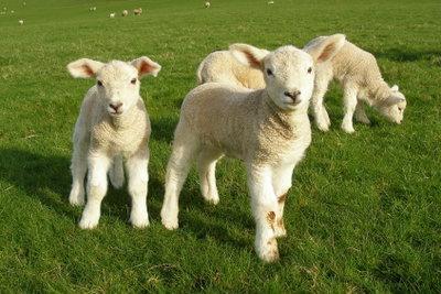 Schminktipps für ein Shaun-das-Schaf-Aussehen