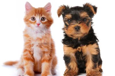 Fogger bekämpft Flöhe, aber nicht bei Hund und Katze.