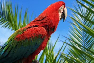 Nähen Sie sich ein Papageien-Kostüm!