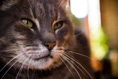 Auch Katzen zwinkern mit den Augen.