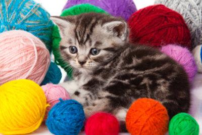 Katzenkinder brauchen viel Beschäftigung.