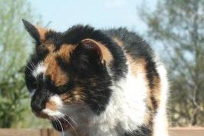 Hat Ihre Katze Flöhe mitgebracht?