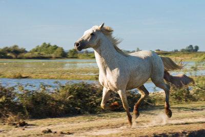 So schützen Sie Ihr Pferd vor Insekten.