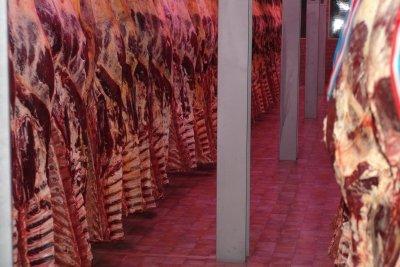 Rindfleisch hängt zur Reifung ab.