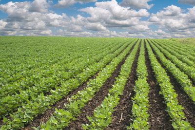 Wer sich organisch ernährt, tut der Welt Gutes.