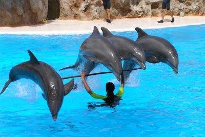 Delfine lernen durch Operante Konditionierung.