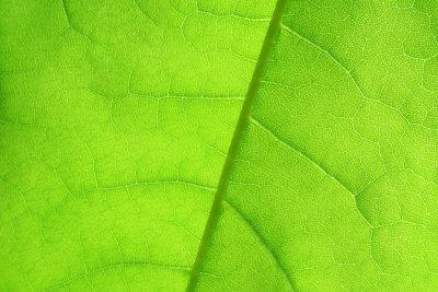 Die lichtabhängige Reaktion der Photosynthese ist einer der wichtigsten biochemischen Prozesse.