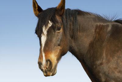 Zum Schutz Ihres Pferdes bietet sich ein Schutzvertrag an