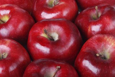 Der Winterapfel Spartan fällt dem Apfelfreund durch seine dunkelrote Farbe auf.
