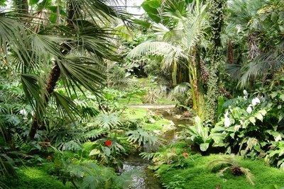 Der Regenwald gehört zu den Tropen.
