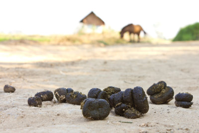 Pferdeäpfel enthalten Enzyme zur Futteraufspaltung.