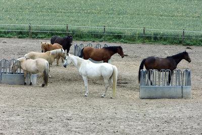 Tamme Hanken heilt vor allem Pferde.