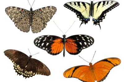 Zoologen spezialisieren sich auf bestimmte Arten.