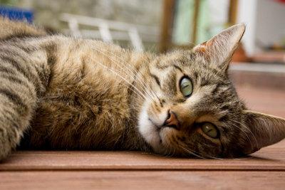 Nicht jede Katze mag jede Katzenstreu.