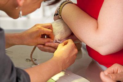 Die eigene Tierarztpraxis ist nur eine Arbeitsmöglichkeit.
