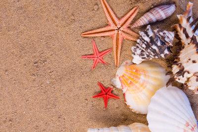 Das Meerjungfrauenkostüm benötigt Muscheln und Seesterne.