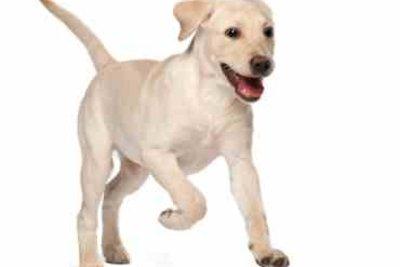 Bei einem Hundetrainer können Vierbeiner viel lernen.