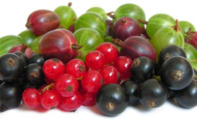 Obst ist maßgeblich für eine gesunde Darmflora.