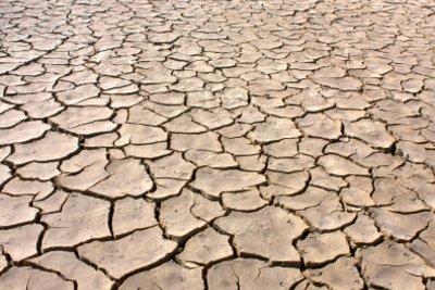 Wüsten sind unerbittliche Lebensräume.
