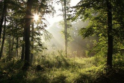 Märchen berichten oft von Zauberwäldern und regen die Fantasie der Kinder an.