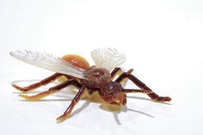 Fliegende Ameisen können Sie auch mit Hausmitteln vertreiben.