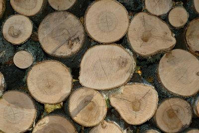 Planung und Überwachung des Holzeinschlages - eine Aufgabe des Försters