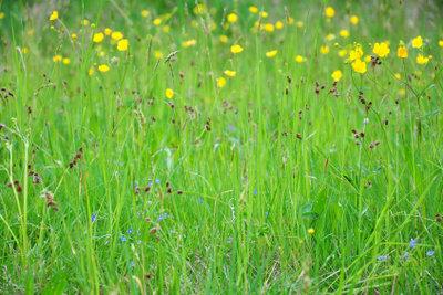 Zarte Gräser - vielfältiger Schmuck für den Garten.