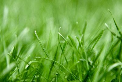 Kräftiger, gesunder Rasen lässt sich gut abtragen.