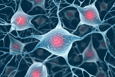 Nervenzellen verfügen über sehr viele Mitochondrien.