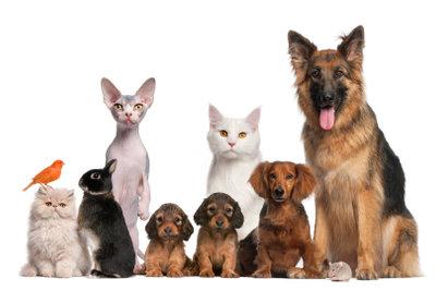 Tiere sind schmerzempfindliche Lebewesen.