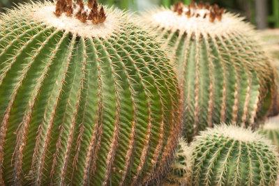 Ein Kaktus-Kostüm selbst gestalten.