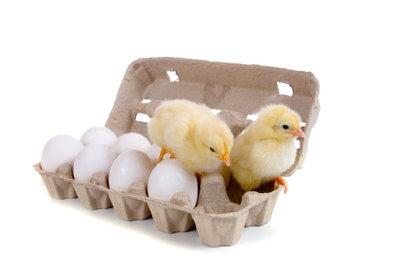 Bio oder Freilandhaltung - Welche Eier sollten Sie kaufen?
