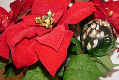 Weihnachtssterne sind Kurztagspflanzen.