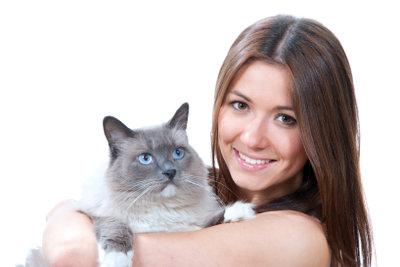 Auch Katzen können Diabetes mellitus bekommen.