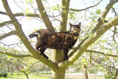 Katzenabwehrgürtel verhindern, dass Katzen in den Baum gelangen.