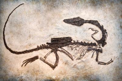 So schön kann ein Fossilienfund aussehen.