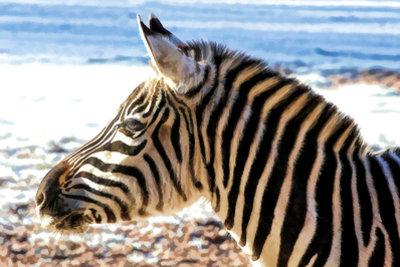 Ein Kurator ist für das Wohl der Tiere im Zoo zuständig.