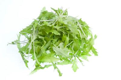 Mizuna-Salat ähnelt dem Löwenzahn- und Rucolasalat.