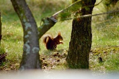 Eichhörnchen brauchen kaum Hilfe im Winter.