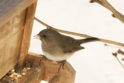 Vogelfütterung ist aktiver Tierschutz.
