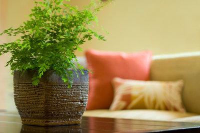 Grünpflanzen verbessern die Raumluft.