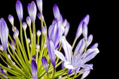 Viele Pflanzen lassen sich durch Teilung vermehren.