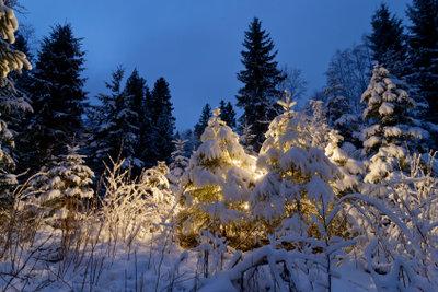 Ein Tannenbaum ist ein schönes Motiv.