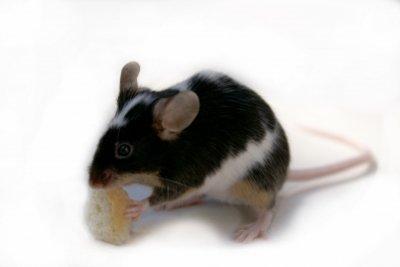 Anleitungen im Bereich Haustiere zum Thema Mäuse
